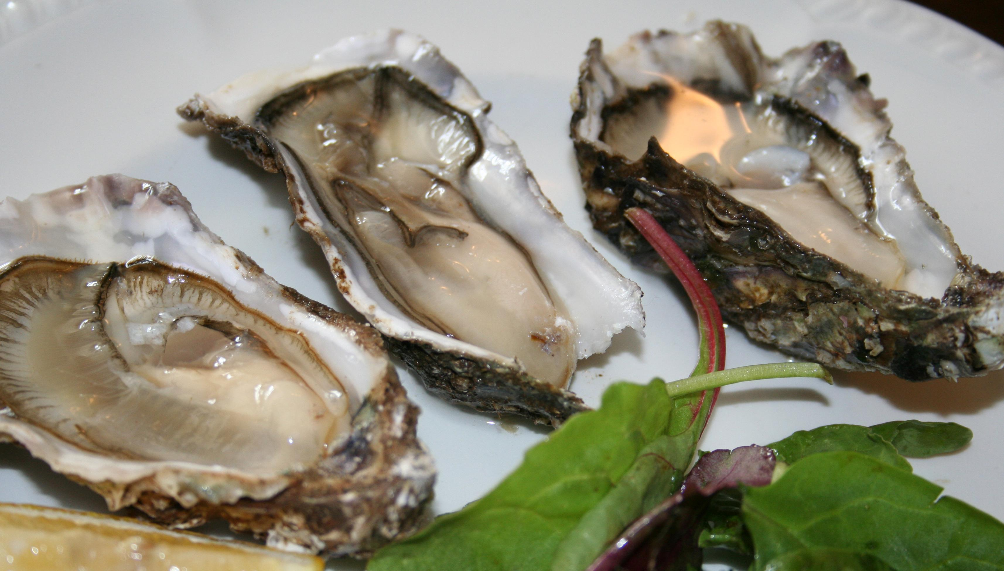 Scottish Oysters