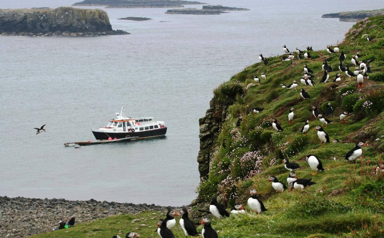 Hoy Lass and puffins