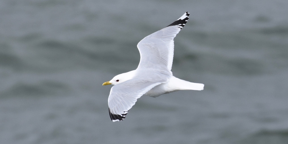 Seabird in flight