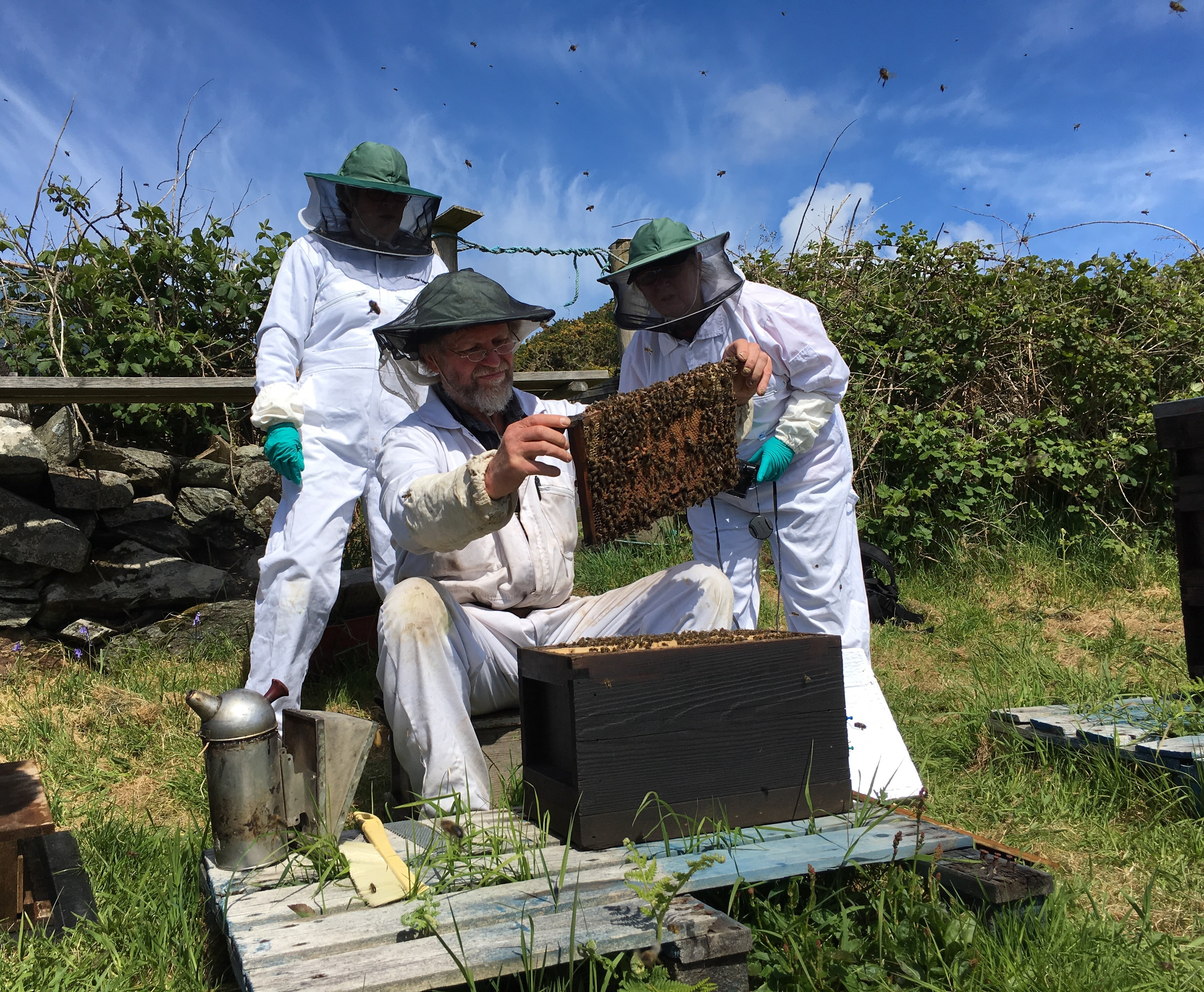 Colonsay Bees